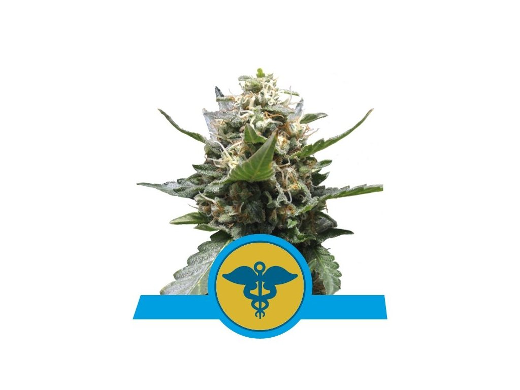 Royal Queen Seeds Royal Medic, feminizovaná semena marihuany, 5ks