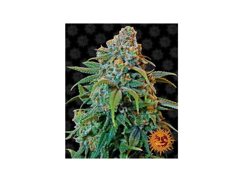 Barney's Farm Liberty Haze, feminizovaná semínka marihuany, 10ks