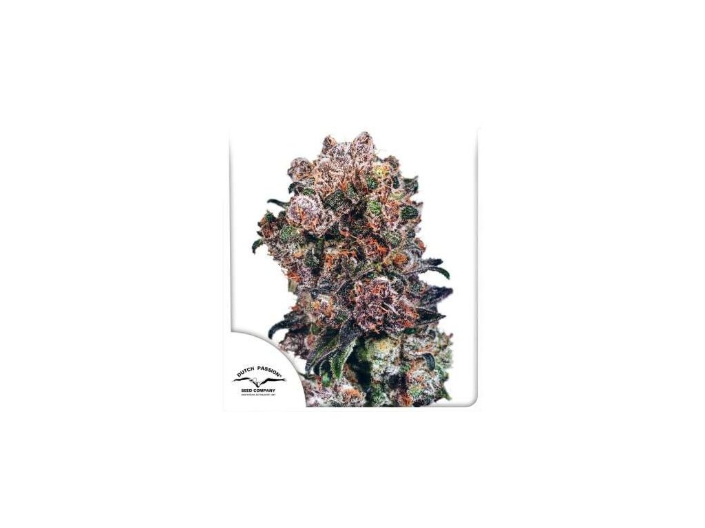 Dutch Passion Blueberry, feminizovaná semínka marihuany, 10ks
