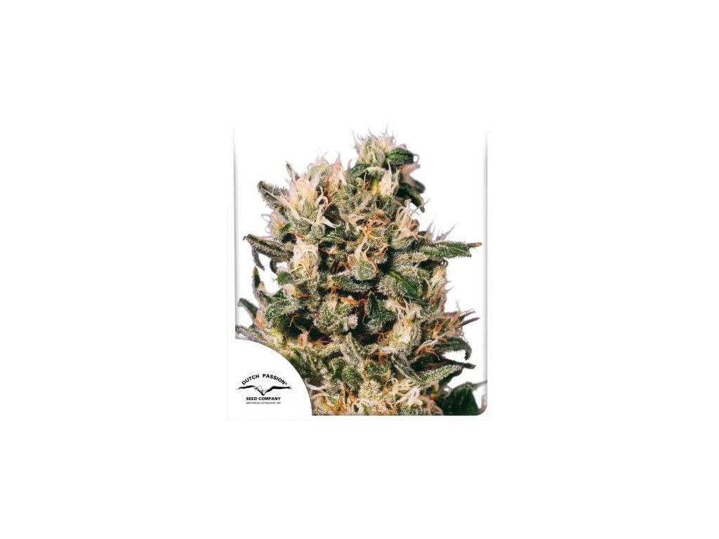 Dutch Passion Euforia, regulérní semena marihuany, 10ks