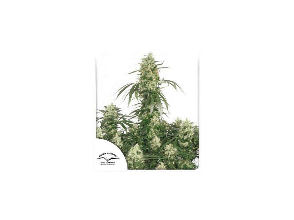 Dutch Passion The Ultimate, feminizovaná semínka marihuany, 10ks