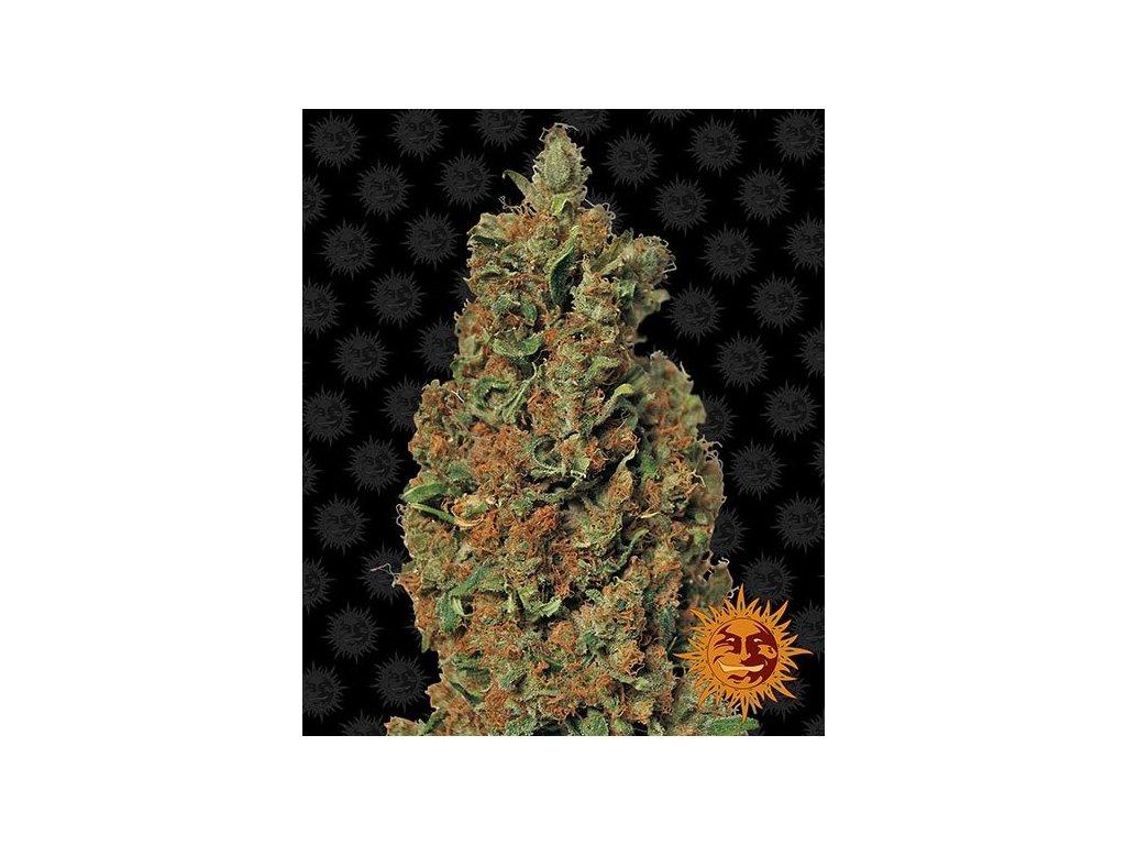 Barney's Farm Red Diesel, feminizovaná semínka marihuany, 10ks