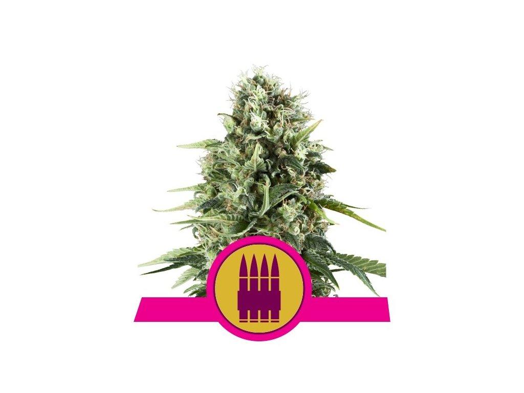 Royal Queen Seeds Royal AK, feminizovaná semínka marihuany, 10ks
