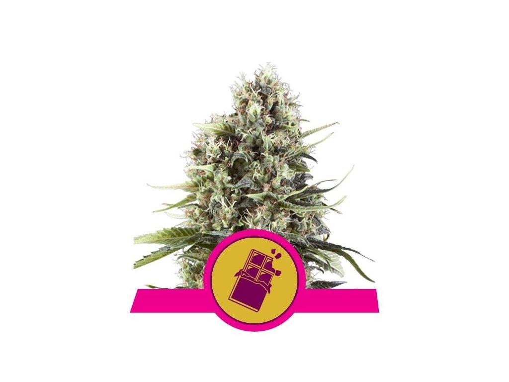 Royal Queen Seeds Chocolate Haze, feminizovaná semena marihuany, 3ks