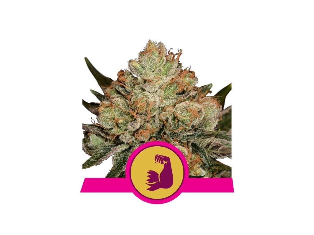 Royal Queen Seeds Hulkberry, feminizovaná semena marihuany, 10ks