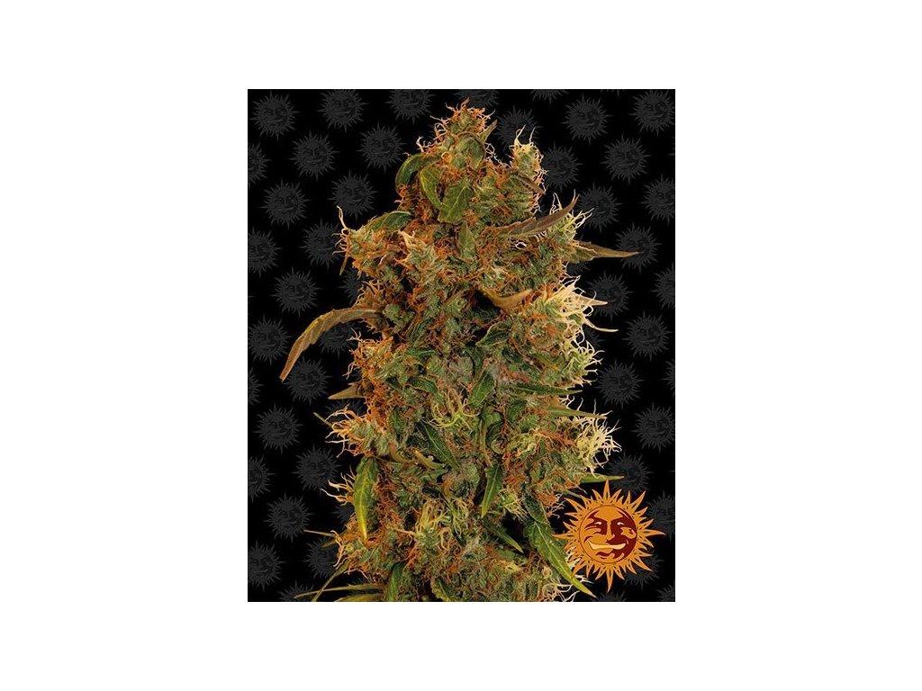 Barney's Farm 8 Ball Kush, feminizovaná semena marihuany, 5ks