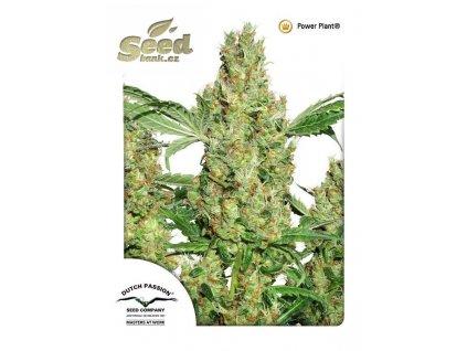 Dutch Passion Power Plant, regulérní semena marihuany, 10ks