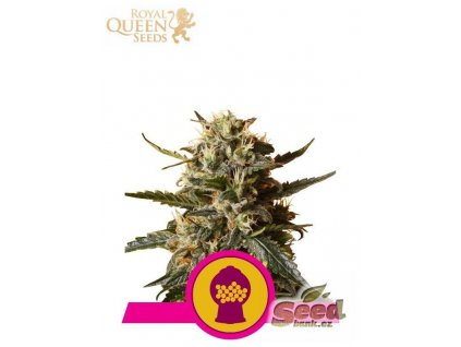 Royal Queen Seeds Bubblegum XL, feminizovaná semena marihuany, 5ks