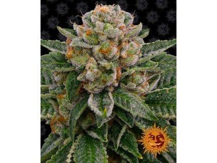 Barney's Farm Skywalker OG Auto, feminizovaná semena marihuany, samonakvétací, 3ks