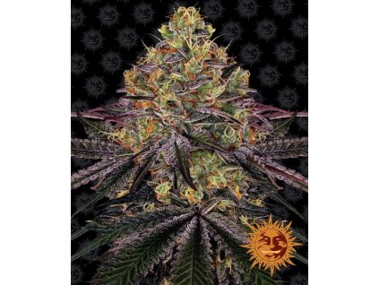Barney's Farm Watermelon Zkittlez, feminizovaná semena marihuany, 3ks