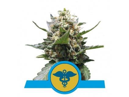 Royal Queen Seeds Royal Medic, feminizovaná semena konopí, 3ks