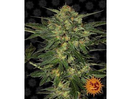 Barney's Farm L.S.D., feminizovaná konopná semínka, 5ks