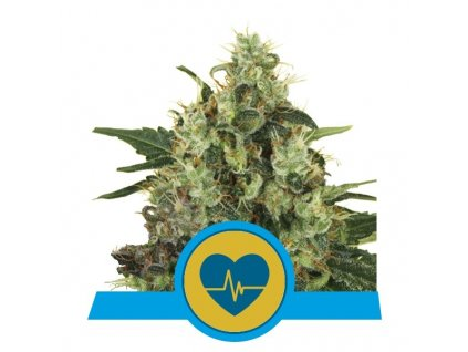 Royal Queen Seeds Medical Mass, feminizovaná semínka marihuany, 10ks