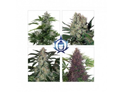 Buddha Seeds Assorted Auto, feminizovaná semena marihuany, samonakvétací, 10ks