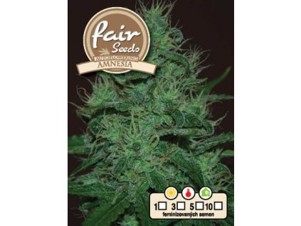 fair seeds AUTO AMNESIA 2020