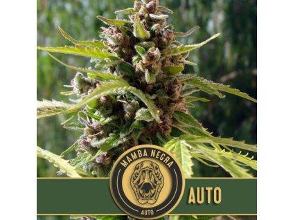 Blimburn Seeds Mamba Negra Auto, feminizovaná semínka marihuany, samonakvétací, 9ks