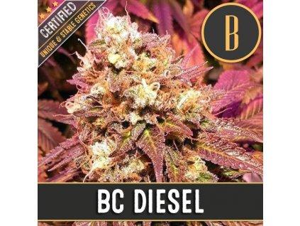 Blimburn Seeds BC Diesel, feminizovaná semínka konopí, 9ks