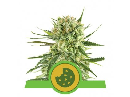 Royal Queen Seeds Royal Cookies Auto, feminizovaná semínka marihuany, samonakvétací, 10ks