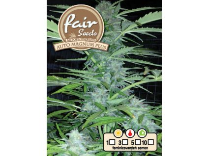 fair seeds AUTO MAGNUM PLUS 2020