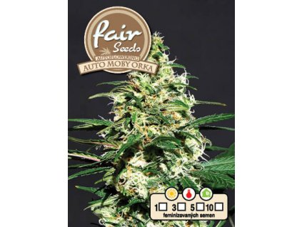 fair seeds AUTO MOBY ORKA 2020