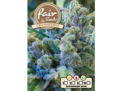 fair seeds CBD MAXIMUS 2020