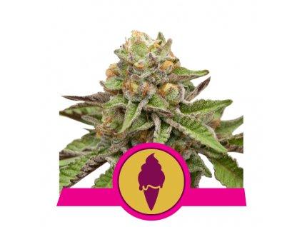 Royal Queen Seeds Green Gelato, feminizovaná semena marihuany, 10ks