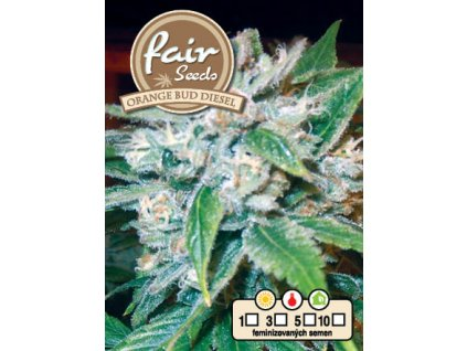 fair seeds ORANGE BUD DIESEL 2020