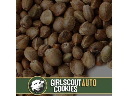 Blimburn Seeds Auto Girl Scout Cookies, feminizovaná semínka konopí, samonakvétací, 9ks