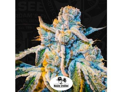 T.H. Seeds X Massive Creations Collaboration Zorro, regulérní semínka marihuany, 10ks