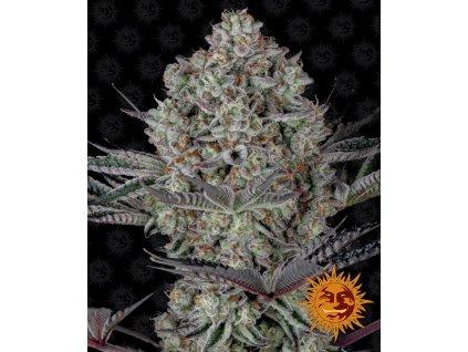 Barney's Farm Dos Si Dos 33, feminizovaná semínka marihuany, 10ks