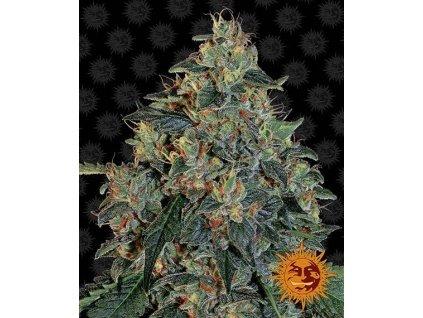 Barney's Farm Blueberry OG, feminizovaná semínka marihuany, 10ks