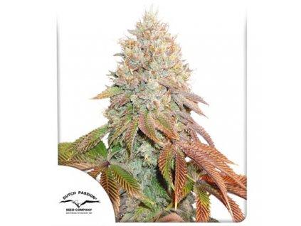 Dutch Passion Auto Banana Blaze, feminizovaná semena marihuany, samonakvétací, 7ks