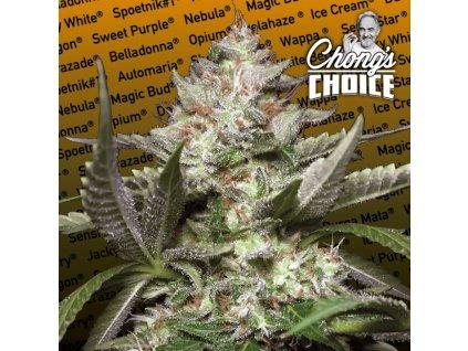 Paradise Seeds Auto Kong 4, feminizovaná semínka marihuany, samonakvétací, 10ks