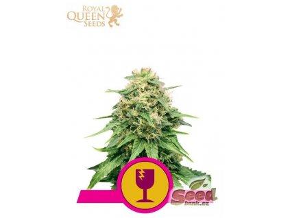 Royal Queen Seeds Critical, feminizovaná semena marihuany, 3ks