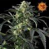 Barney's Farm Crimea Blue, feminizovaná semena marihuany, 5ks
