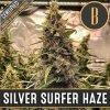 Blimburn Seeds Silver Surfer Haze (Super Surfer Haze), feminizovaná semena konopí, 3ks