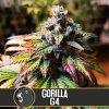 Blimburn Seeds Gorilla G4, feminizovaná semínka marihuany, 9ks