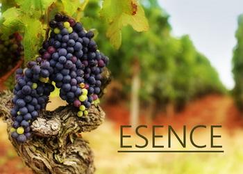 Jakou esenci či aroma najdeme v červeném víně?