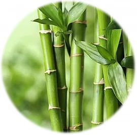 Bambus K