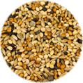 Kukuřice Soja K
