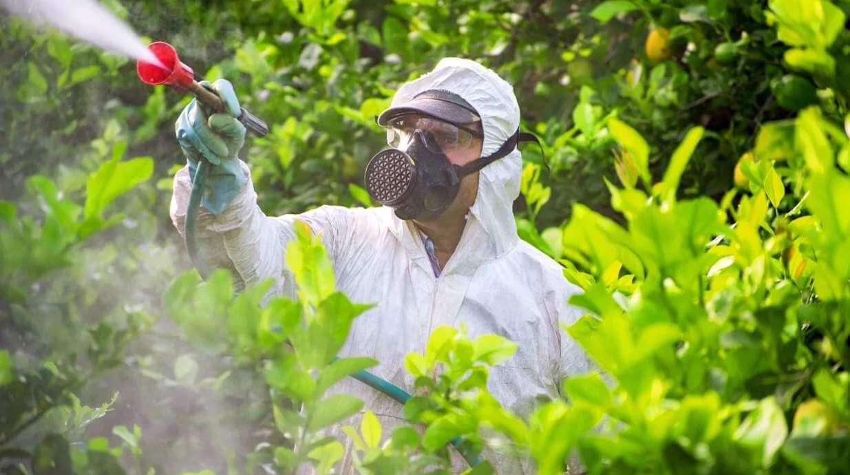 Mohou pesticidy ve vaší stravě zpomalit hubnutí?