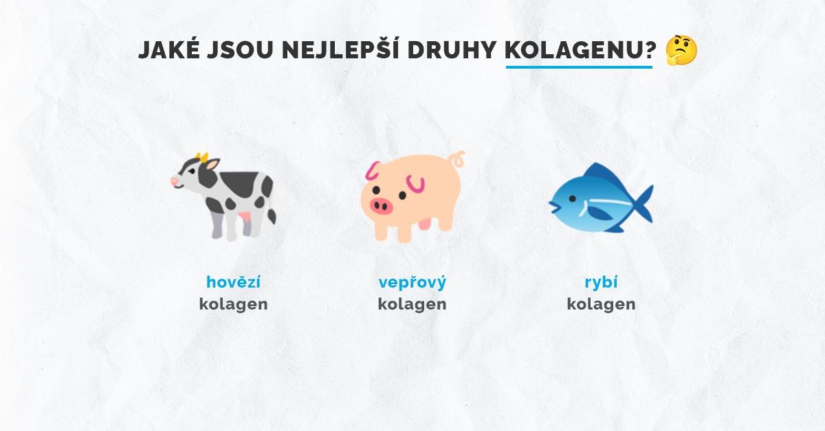 Jaké jsou nejlepší druhy kolagenu?