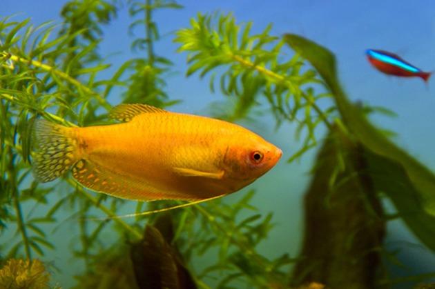 Chraňte přírodu a její krásu pomocí produktů Ocean Nutrition