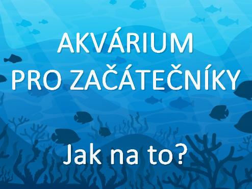 První akvárium - užitečné rady začínajícím akvaristům