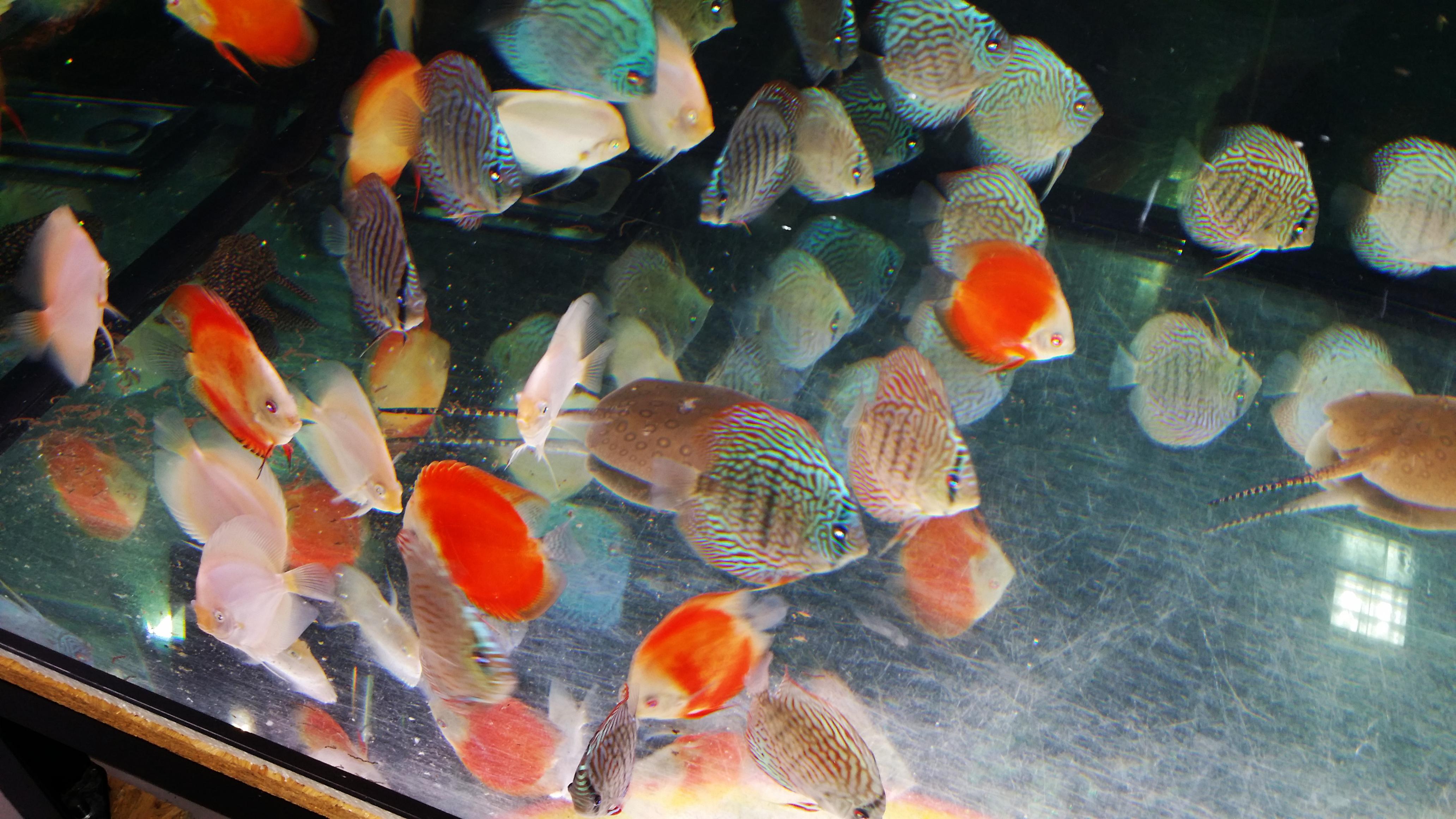 Chovatelské potřeby a akvaristika Zlín