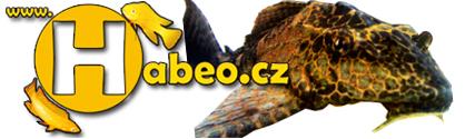 Habeo.cz