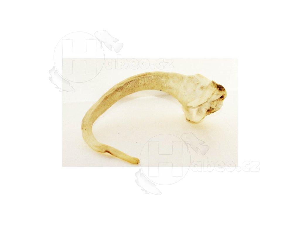 Oháňka vepřová - bílá prasečí ocásek ocas prasete