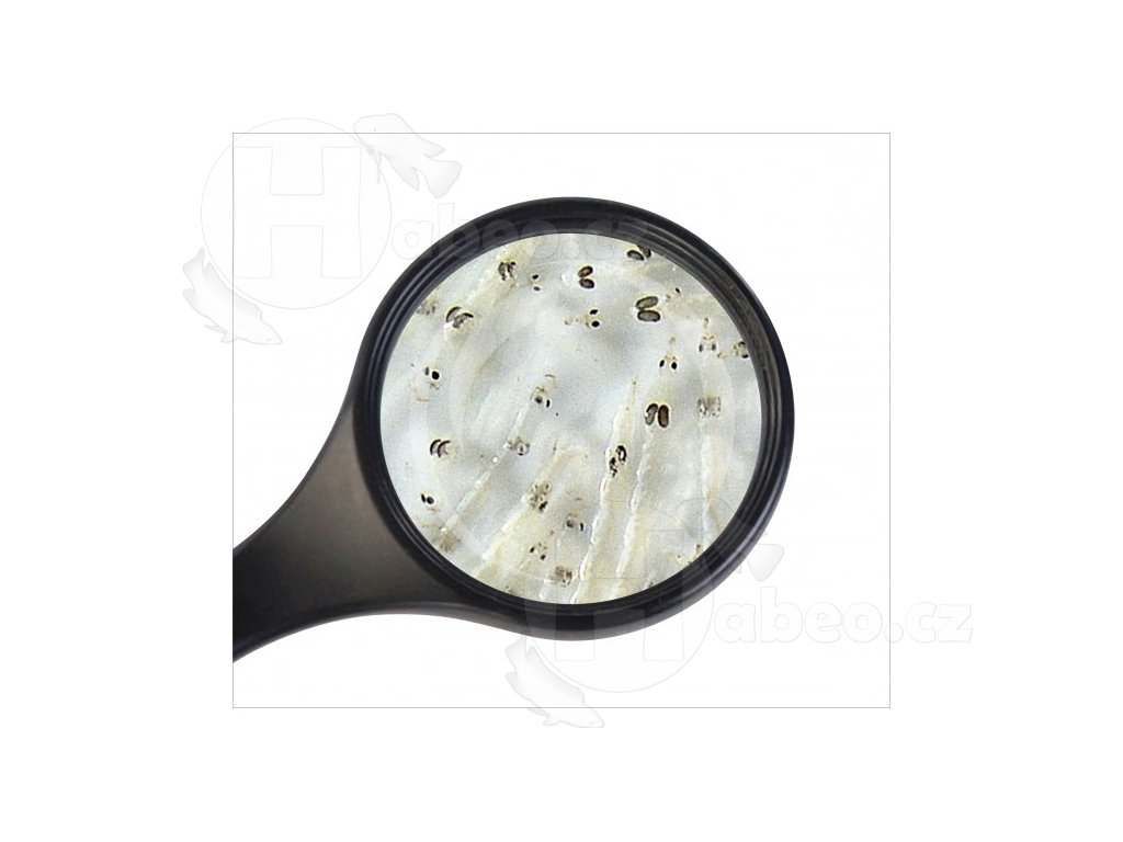 Koretra živá (bílá komáří larva) 45 ml  Živá koretra (bílá komáří larva) 45ml