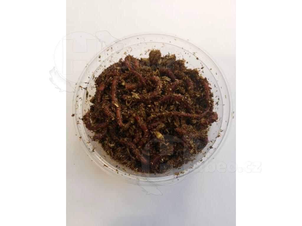 ŽÍŽALY DO KOMPOSTU KOMPOSTOVÁNÍ  hnojky žížaly hnojní žížaly Hnojní žížala 30 ks žížaly rybáři krmné krmivo žížalice dendrobeny