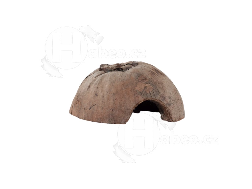 Kokosové iglů